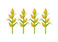 Icono aislado cultive del maíz Foto de archivo