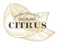 Icono aislado de los agrios con poner letras al limón o a la cal ilustración del vector
