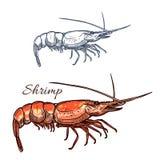 Icono aislado vector del bosquejo del camarón Fotos de archivo libres de regalías