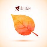 Icono anaranjado de la hoja de la acuarela del otoño Imagen de archivo libre de regalías