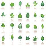 Icono de la hoja del árbol Fotografía de archivo