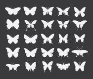 Icono de la mariposa en fondo del colorfull imagenes de archivo