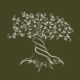 Icono de la silueta del rizo del esquema del olivo Foto de archivo libre de regalías