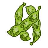 Icono de la soja verde, estilo exhausto de la mano stock de ilustración