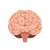 Icono de la vista delantera del cerebro Foto de archivo