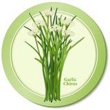 Icono de las cebolletas de ajo Imágenes de archivo libres de regalías