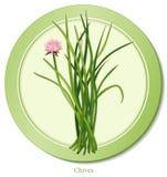 icono de las cebolletas de +EPS Imagen de archivo