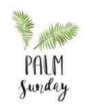 Icono de las hojas de palma Vector el ejemplo para Ramos cristiano Domingo del día de fiesta stock de ilustración