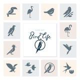 Icono de los pájaros del vector fijado en el estilo plano para el producto, la marca o los gráficos stock de ilustración