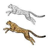 Icono del animal salvaje del bosquejo del vector del guepardo libre illustration