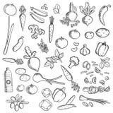 Icono del bosquejo de las verduras frescas y de los condimentos Imagenes de archivo