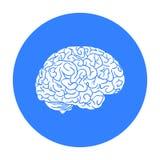 Icono del cerebro humano en estilo negro aislado en el fondo blanco Ejemplo del vector de la acción del símbolo de los órganos hu Imagenes de archivo