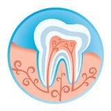 Icono dental Foto de archivo libre de regalías