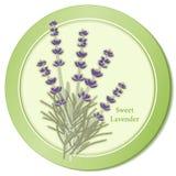 Icono dulce de la hierba de la lavanda Fotos de archivo