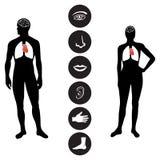 Icono humano médico de la parte del cuerpo Imagen de archivo