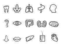 Icono humano negro del esquema de la anatomía Fotografía de archivo