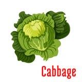 Icono vegetal del vector de la col libre illustration