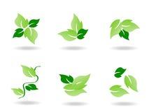 Icono verde de la hoja Foto de archivo libre de regalías