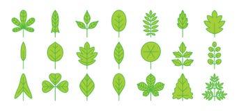 Icono verde de la hoja Esquema simple fino del follaje Vector plano ilustración del vector