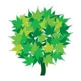 Icono verde del árbol con las hojas aisladas Imagen de archivo libre de regalías