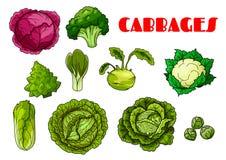 Iconos aislados col vegetal del vector libre illustration