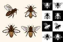 Iconos de la abeja del vector ilustración del vector
