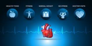 Iconos de la atención sanitaria de la cardiología y anatomía del corazón Imagen de archivo libre de regalías