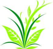 Iconos de la planta verde Logotipo simple del vector Fotografía de archivo libre de regalías