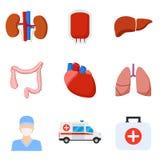 Iconos de los órganos internos Foto de archivo libre de regalías
