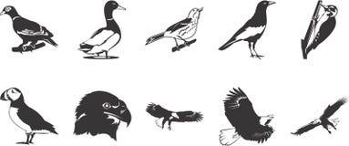 Iconos de los pájaros Imagen de archivo libre de regalías