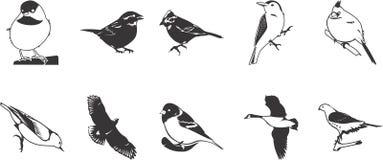 Iconos de los pájaros fijados Imagenes de archivo