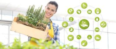 Iconos del comercio electrónico del equipo que cultiva un huerto, mujer sonriente con la caja de madera por completo de hierbas d libre illustration