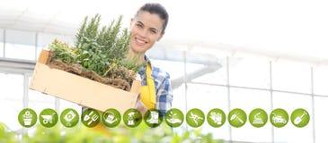 Iconos del comercio electrónico del equipo que cultiva un huerto, mujer sonriente con la caja de madera por completo de hierbas d foto de archivo