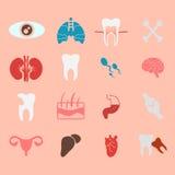 Iconos del diseño plano interno de los órganos humanos Fotografía de archivo libre de regalías