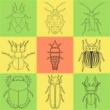 Iconos del insecto fijados dor-escarabajo y luciérnaga, firebug y hormiga, mosca y cucaracha, escarabajo de la patata y mosquito Fotos de archivo
