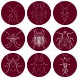 Iconos del insecto fijados Manipule y haga tictac, apeste el insecto y grillo, mosca y piojo, escarabajo de la patata y mosquito, Fotos de archivo