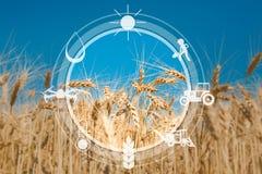 Iconos del sensor de Digitaces para la gestión y la agricultura de la supervisión fotos de archivo libres de regalías