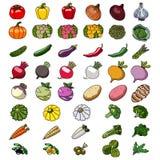 Iconos del vector de verduras bosquejos foto de archivo libre de regalías