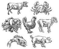 Iconos dibujados mano de las opciones del menú del Grunge de los grupos de alimentos stock de ilustración