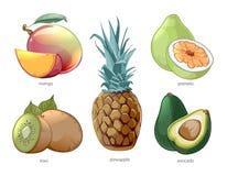 Iconos exóticos del vector de las frutas del trópico de la historieta fijados Fotos de archivo