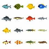 Iconos fijados, estilo plano de los pescados stock de ilustración