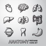 Iconos handdrawn internos de los órganos humanos fijados con - Imagen de archivo libre de regalías