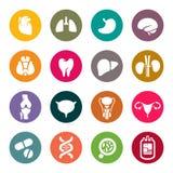 Iconos médicos. Órganos humanos Imagen de archivo