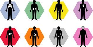 Iconos médicos del órgano de la carrocería Fotos de archivo libres de regalías