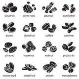 Iconos Nuts fijados Foto de archivo