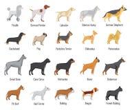Iconos planos del vector de la raza de los perros fijados Fotos de archivo libres de regalías