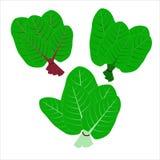 Iconos planos del vector Vehículo verde frondoso Comida orgánica y healty fotos de archivo