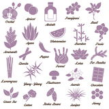 Icons for aromatic plants, herbas and woods Stock Photos