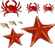 Crabs, shells and starfish vector illustration