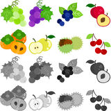 The icons of fruits. Muscat and grape and blueberry and plum and persimmon and pear and chestnut and cherry stock illustration